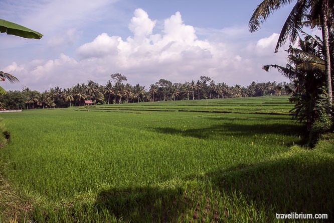 rice_fields_04